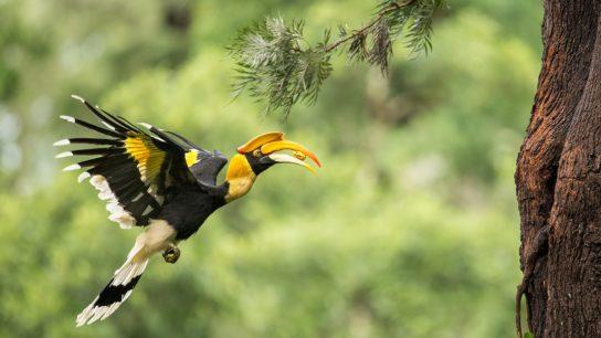Shh! Listen: Can bioacoustic technology measure biodiversity?
