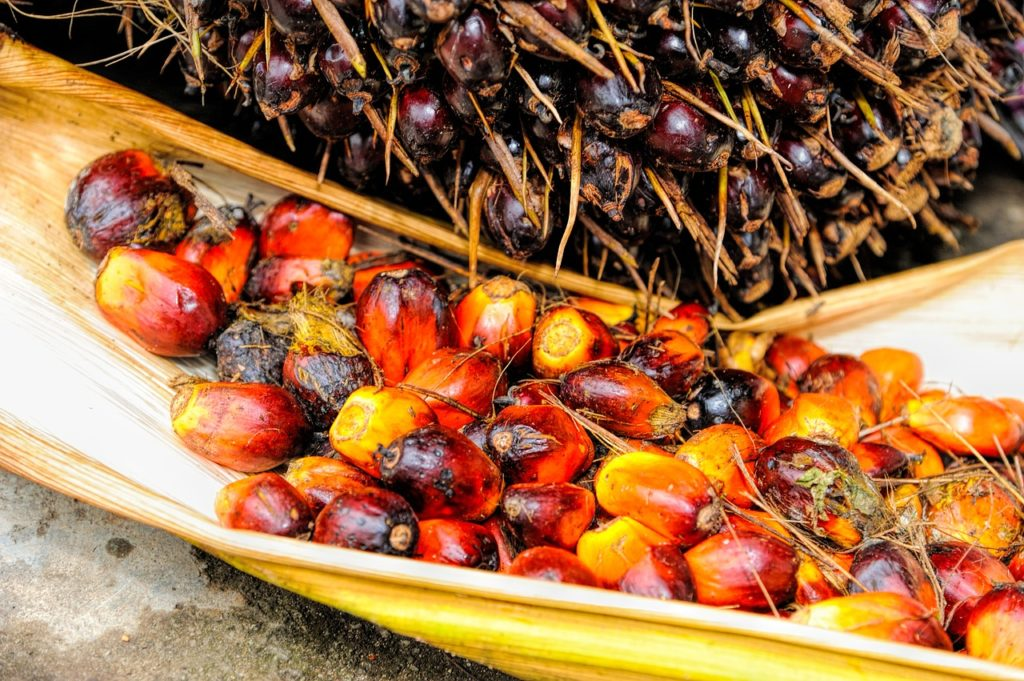 How Palm Oil Contributes To Environmental Destruction