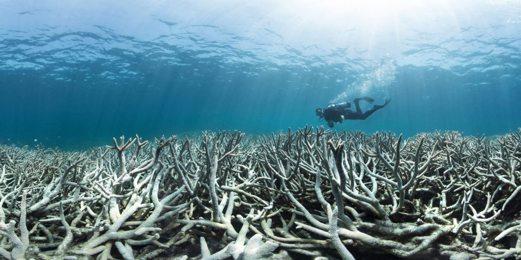 5 Coral Reefs That Are Currently Under Threat and Dying