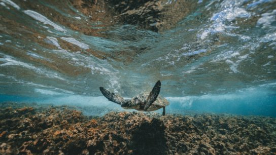 The Philippines' Marine Biodiversity Faces Decimation