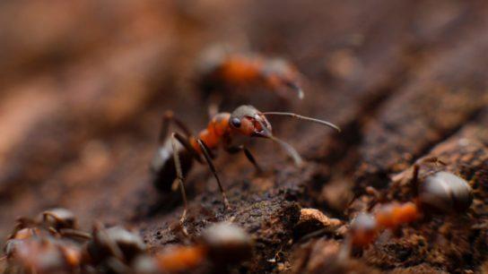 Invasive Species: World's Ecosystems Facing a Fresh Threat