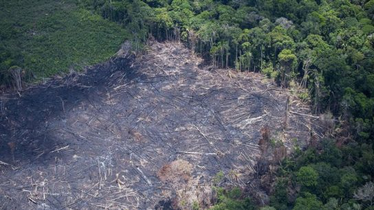 Fire Is Not the Only Threat Amazon Forest Faces