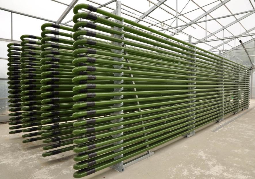 algal biofuel