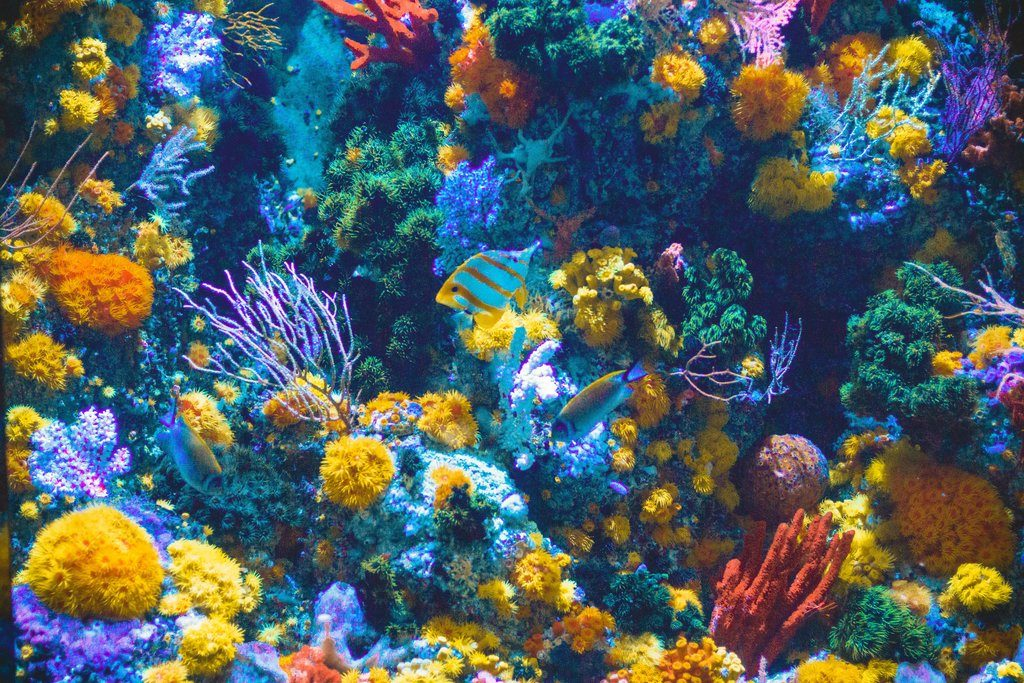 Improving the Resilience of Coral Reefs