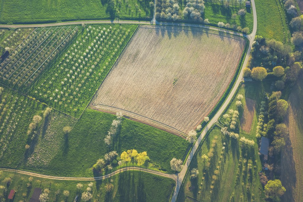 The Global Quest for Farmland