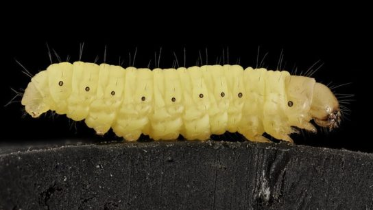 How Wax Worms Can Be Used to Fight Plastic Waste