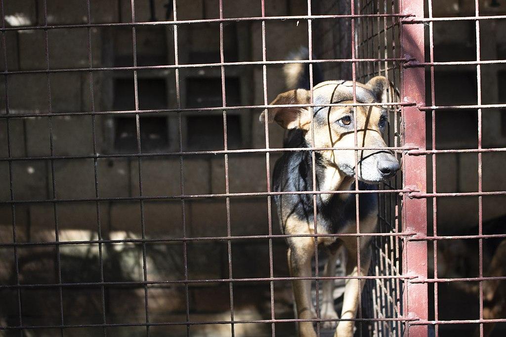 UN Biodiversity Chief Calls for a Permanent Ban on Wildlife Markets