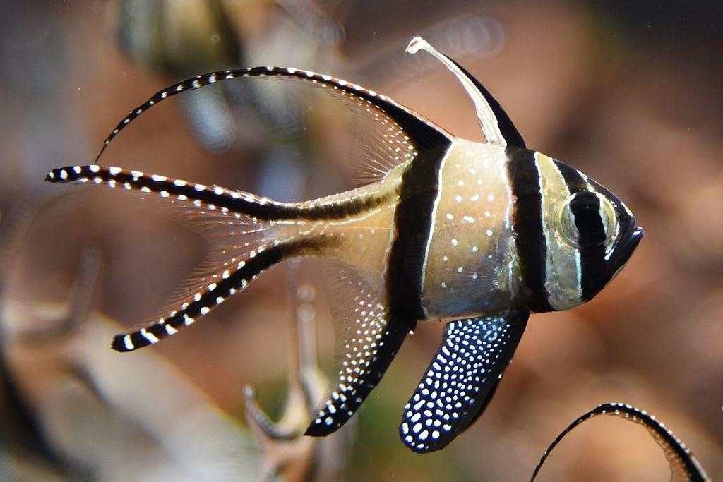 The Destructive Truth Behind Aquariums