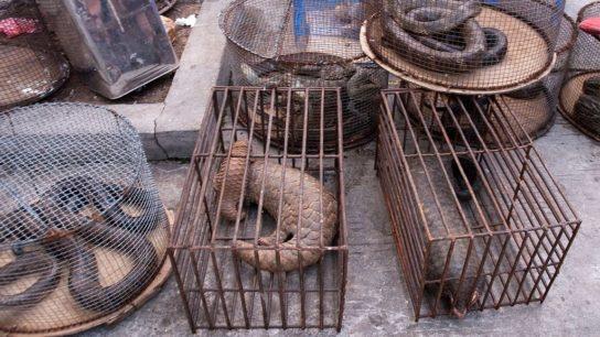China Bans Wildlife Trade: Will it Work?