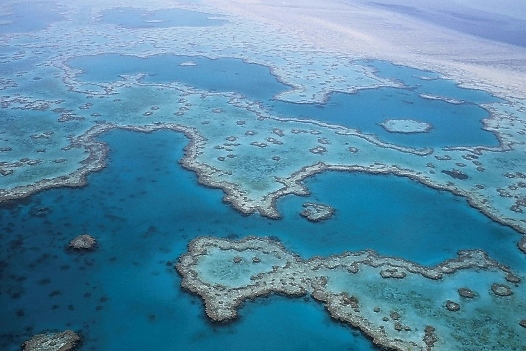 How Can The Great Barrier Reef be Saved?