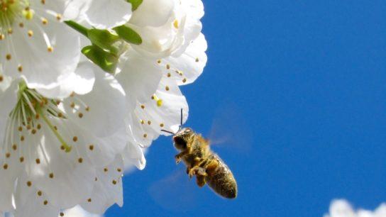EU Pledges To Raise €20bn Annually for Biodiversity Strategy