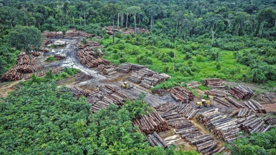 Rapid Deforestation of Brazilian Amazon Could Bring Next Pandemic: Experts