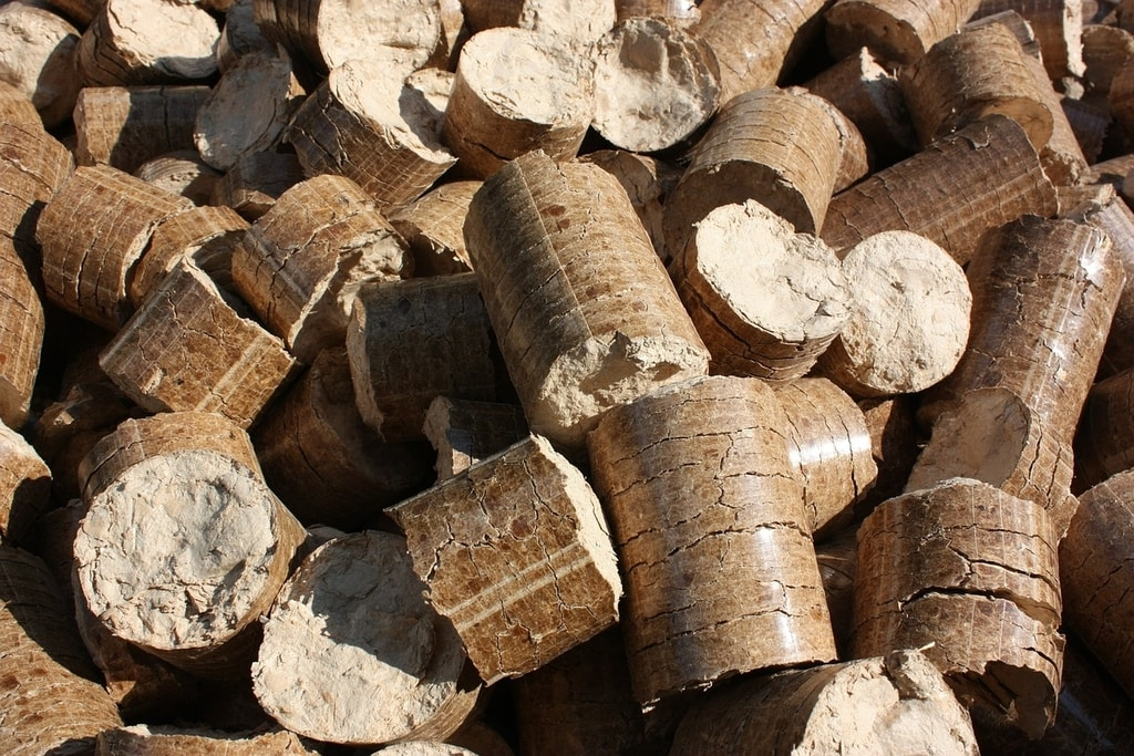 forest cover wood biomass