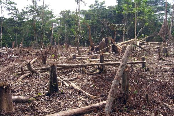 14 Straight Months of Rising Amazon Deforestation in Brazil