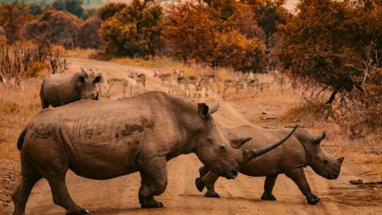 Tourism Has Crashed: Are Carbon Credits the Future for Funding Conservation in Africa?