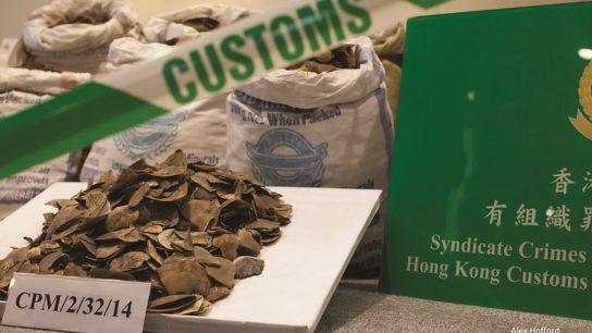 Did China Really Ban the Pangolin Trade? Not Quite, Investigators Say