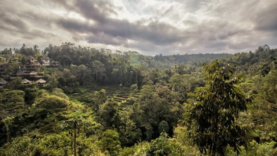 Indonesia to Receive $56m Payment from Norway for Reducing Deforestation