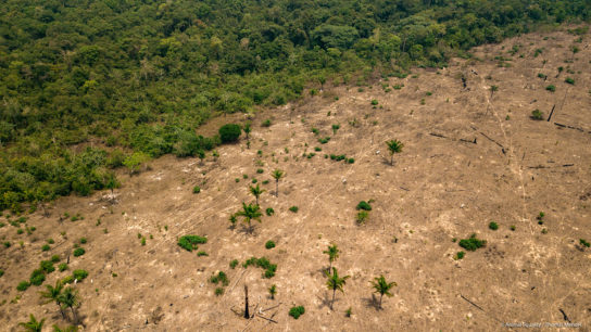 Deforestation in Amazon Increased by 10% in June