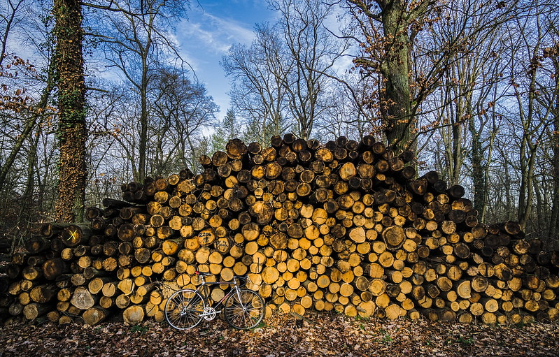 How Developed Countries are Exploiting Developing Countries for Biomass Energy