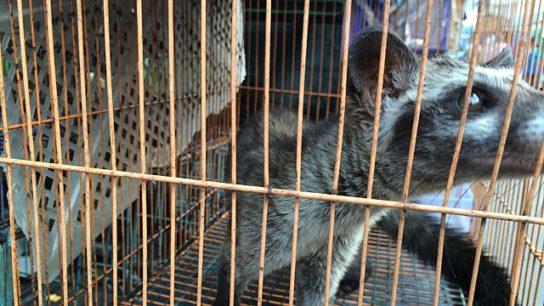 Vietnam Bans Wildlife Trade to Reduce Risk of Future Pandemics