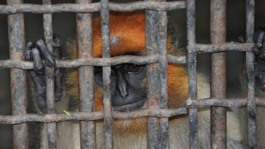 As COVID-19 Pandemic Deepens, Global Wildlife Treaty Faces an Identity Crisis