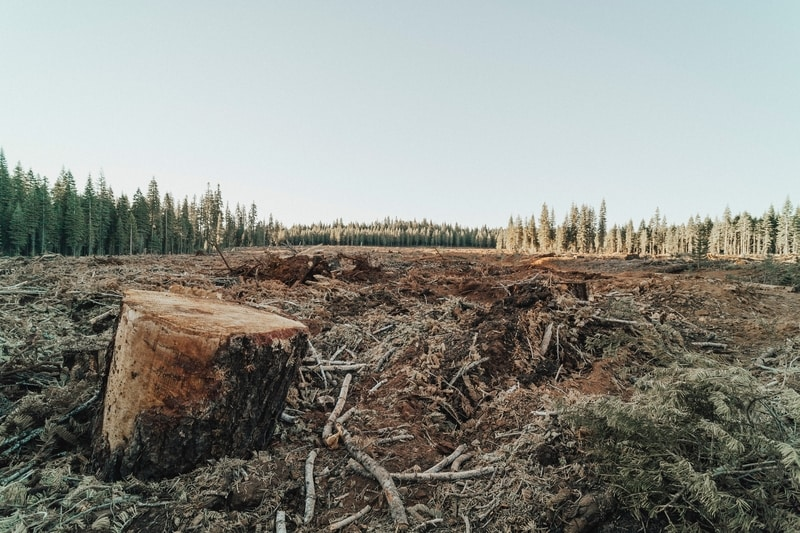 Brazil's Beef and Soy Exports to the EU Linked to Illegal Deforestation- Study