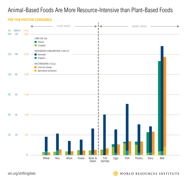 Animal-Based Foods vs Plant-Based Foods.