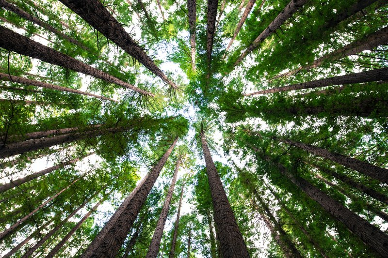 The Climate Crisis is Making Forests Grow Younger and Shorter- Study