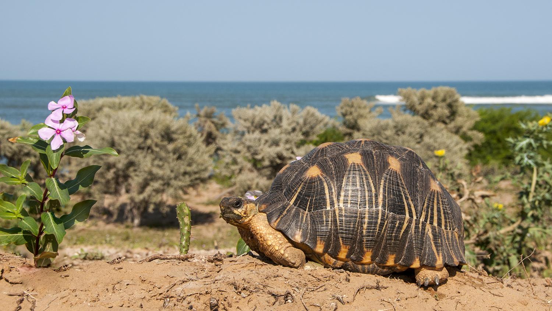 turtle tortoise extinction