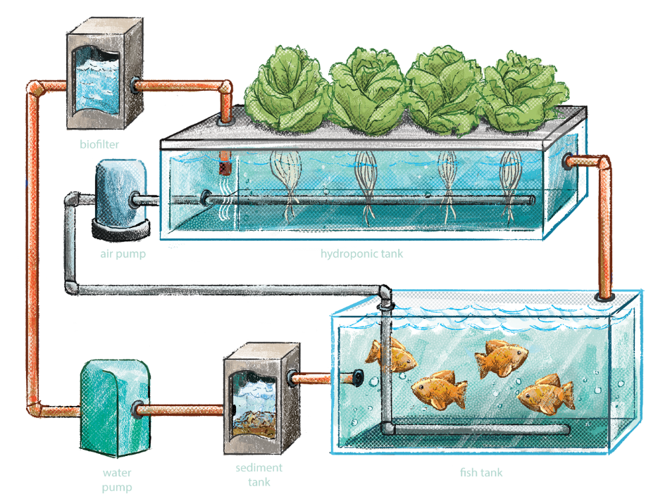 Aquaponics: A Solution To Food Insecurity? | Earth.Org - Past | Present |  Future