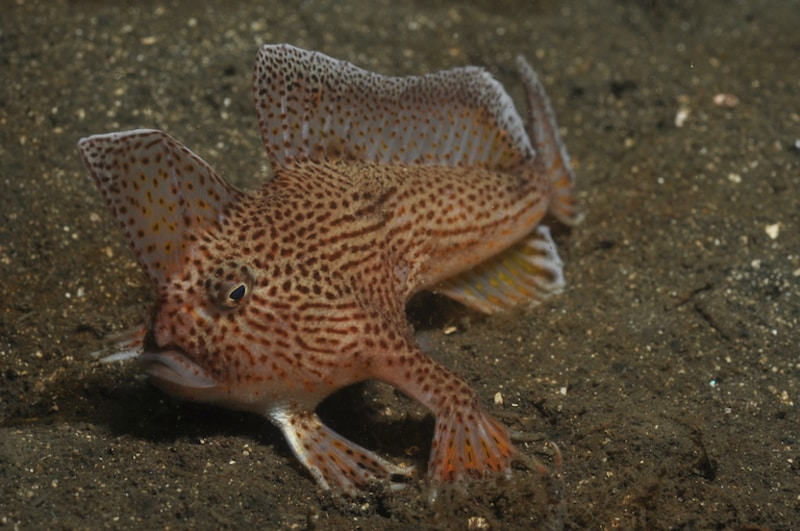 The First Modern-Day Marine Fish Has Officially Gone Extinct. More May Follow