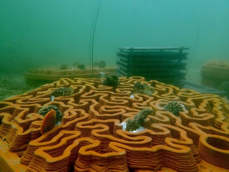 How 3D-Printed Tiles Can Help Restore Corals in Hong Kong