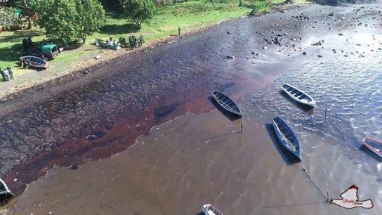 Oil Spill in Mauritius Threatens to Devastate Local Biodiversity