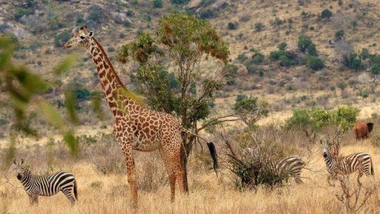 Fires in Kenya Have Devastated the Tsavo National Park