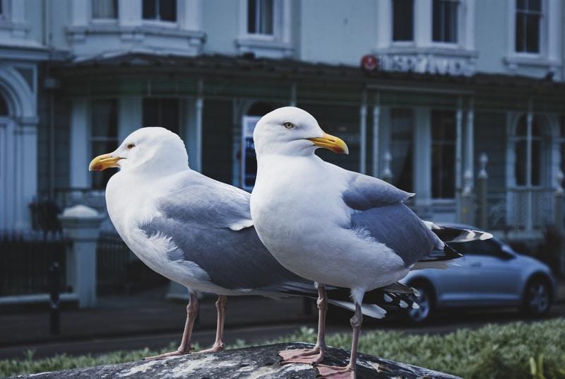 Seabirds' Fecal Waste is Worth $1 Billion Annually- Study