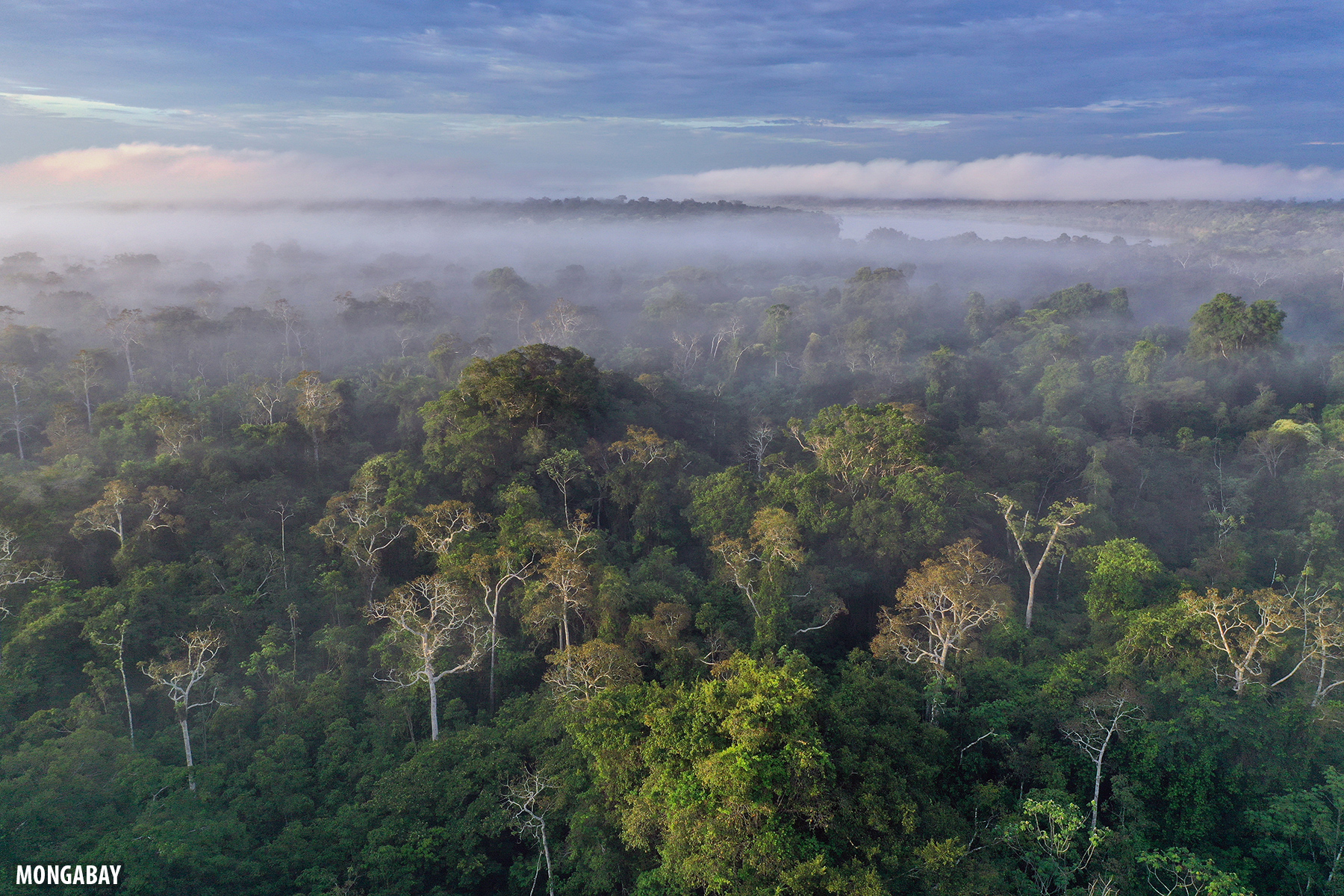 forests climate change