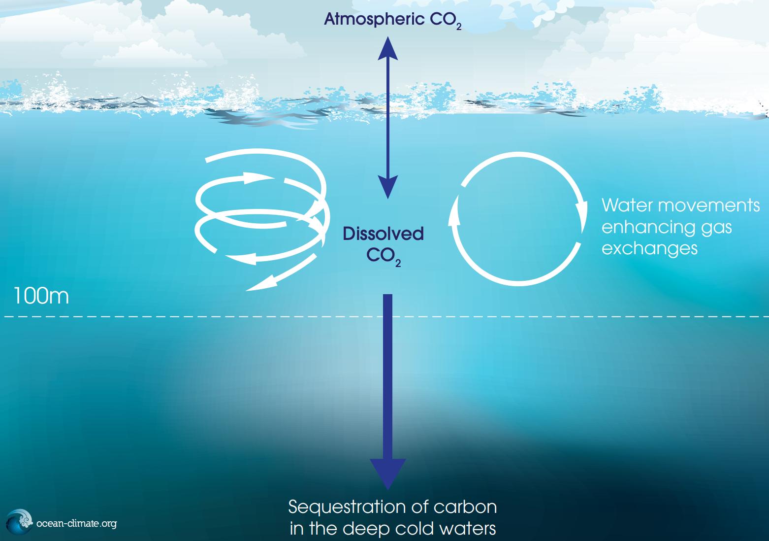 ocean carbon storage