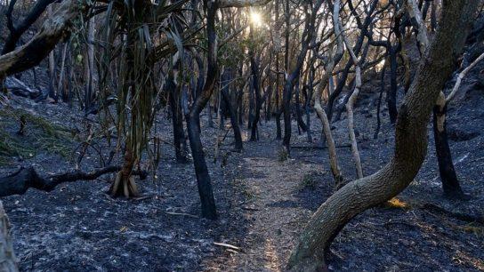 Scientists Urge Reassessment of Threatened Species After Australian Bushfires