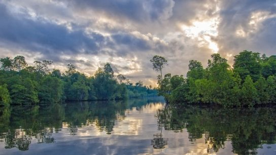 Global Loss Rate of Mangrove Forests Has Dropped