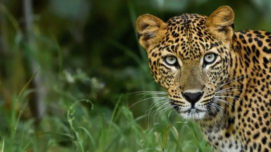 68% Decline in Species Population Sizes Since 1970- WWF