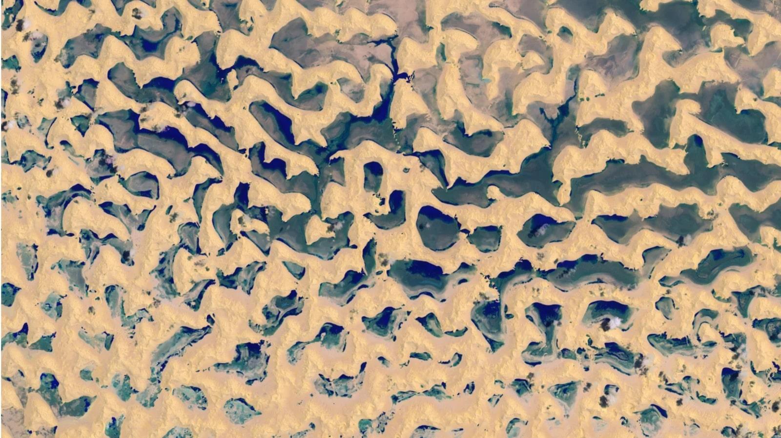 rainfall desert locusts
