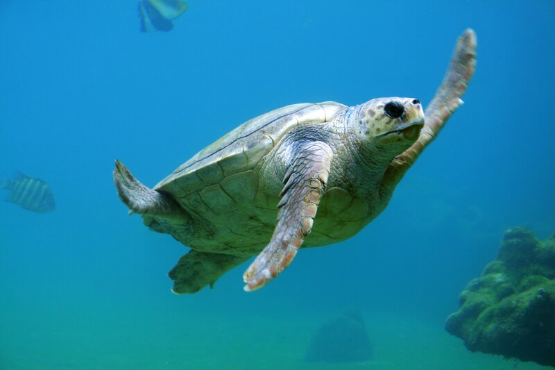World Fails to Meet Single Aichi Biodiversity Target To Stop Destruction of Nature- UN