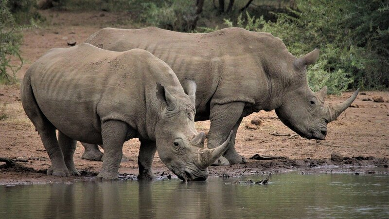 7 Fascinating Facts About Rhinos You Might Not Know About