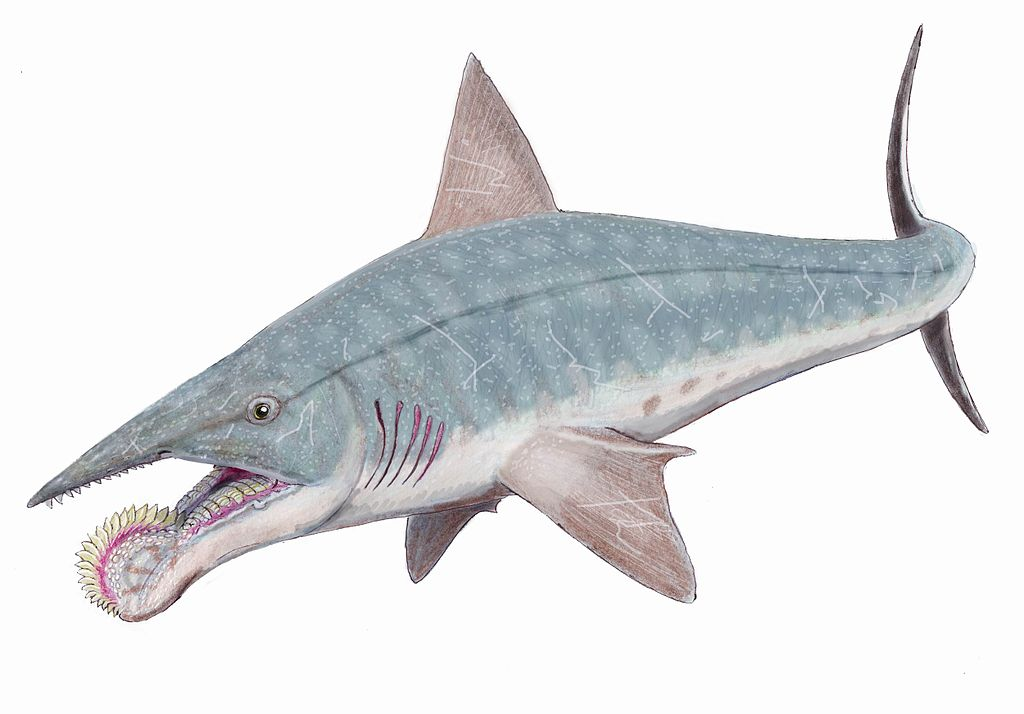 helicoprion old sharks