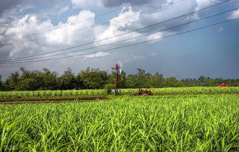 Fertiliser Use is Causing Nitrous Oxide Emissions to Rise Rapidly- Study