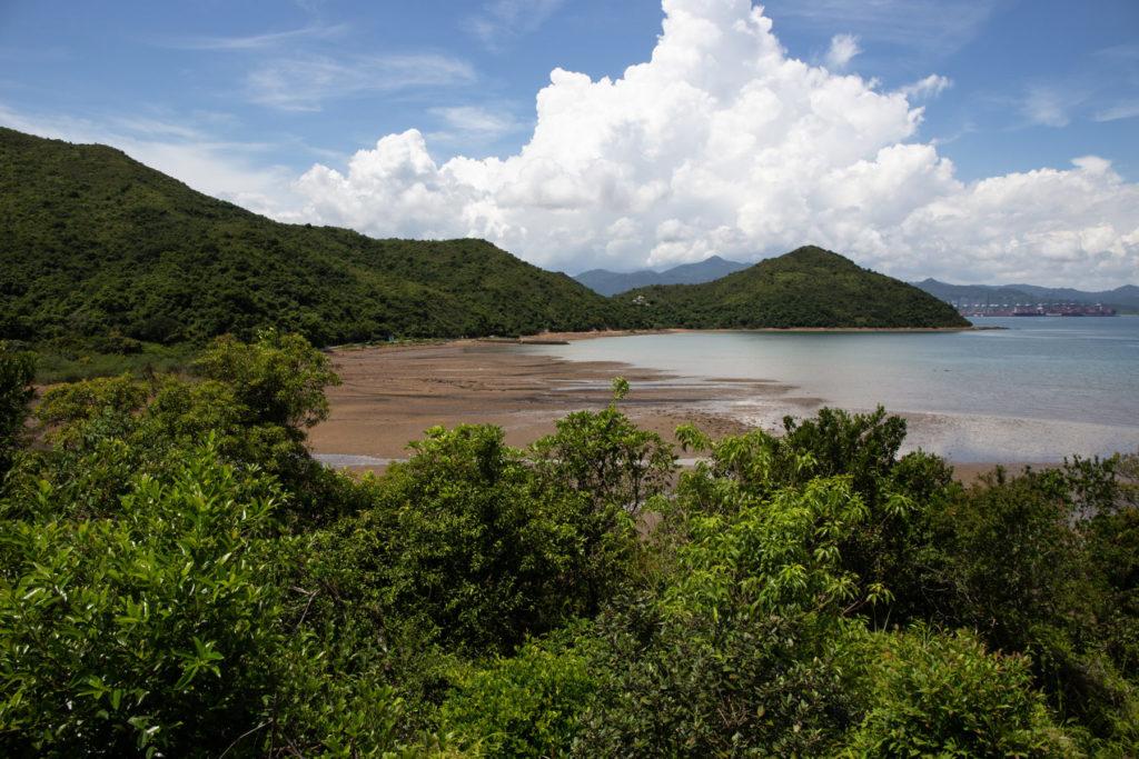 lai chi wo hong kong mangroves