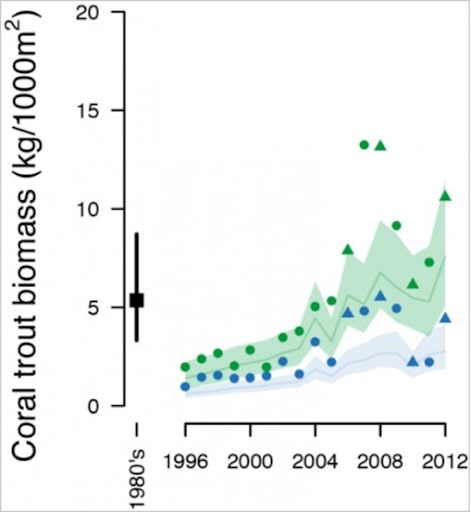 coral trout great barrier reef population rebound
