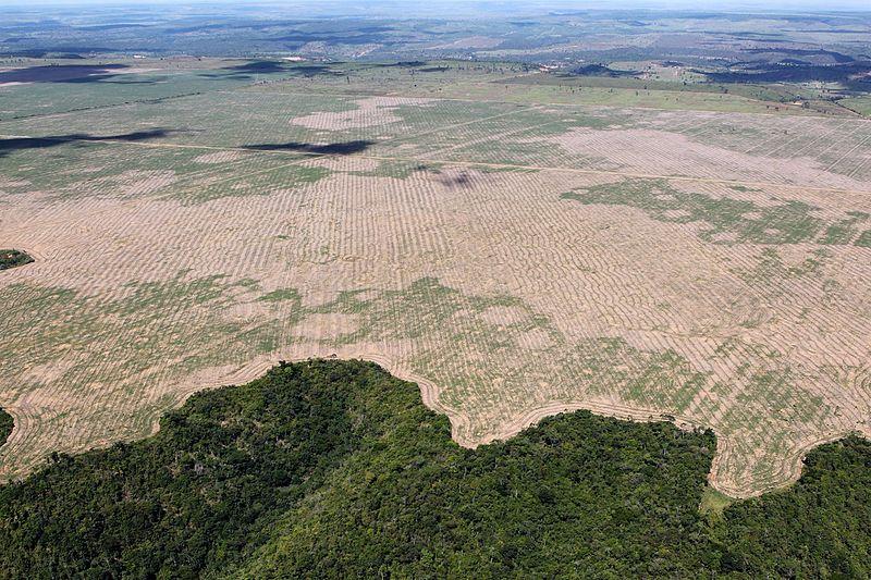 10 Major Companies Responsible for Deforestation
