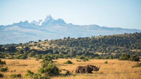 Borana Conservancy: Balancing Wildlife Conservation With Community Partnerships in Kenya