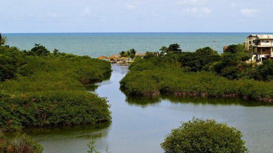 Brazilian Court Blocks Government's Decision to Revoke Mangrove Protections